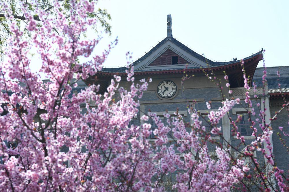 春意盎然娇艳多姿 花季济南迎来无限好春光