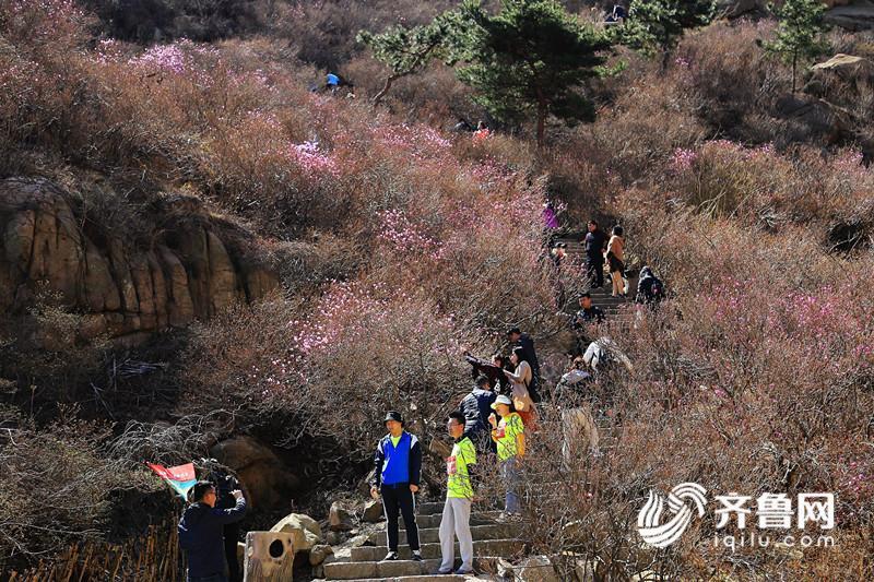 1、大珠山风景区珠山秀谷杜鹃花初绽,游客正在赏花。 (1)_副本.jpg