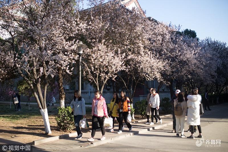 组图丨山东这所高校内花香四溢 学生上课如穿行画中