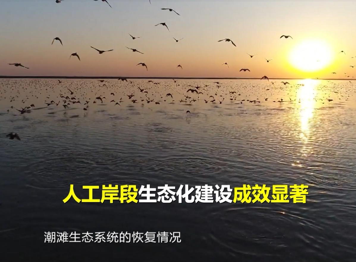 113秒视频告诉你,稀有鸟类、野生海马为什么来山东?