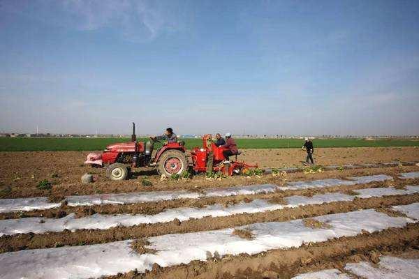 山东加强春耕备耕期间地膜回收工作 治理白色污染