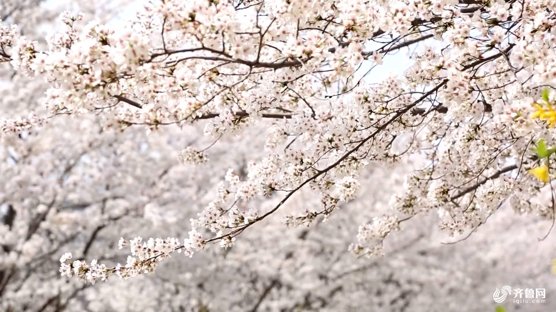 花红柳绿.JPG