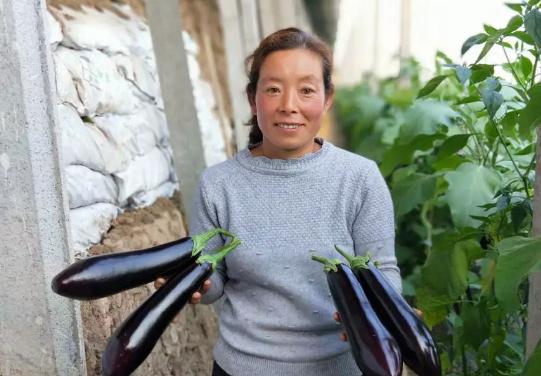 """每年财政投入600万元 寿光""""良田-良品""""工程让菜农实现增收梦"""