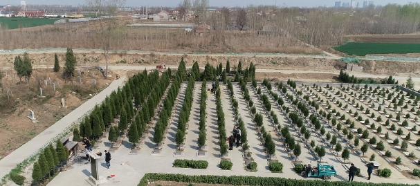 临淄区凤凰镇王桥村推进移风易俗 因地制宜完成公益性墓地建设