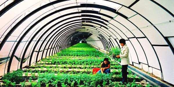 植树造林、农田骨干水网建设……寿光今年农业农村工作将重点干好这些事