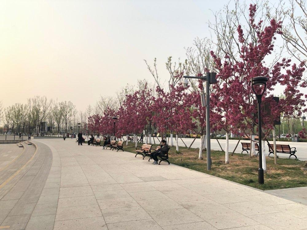 规范加人性化管理 淄博孝妇河湿地公园成为城市名片