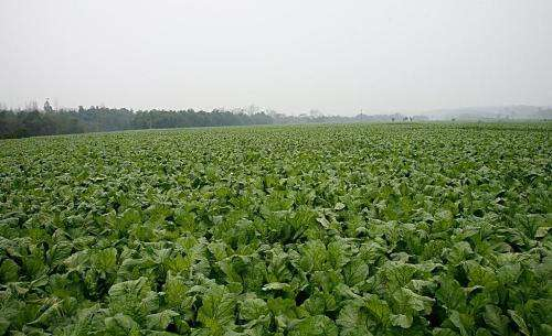 力争到2020年 济南蔬菜播种面积稳定在150万亩以上
