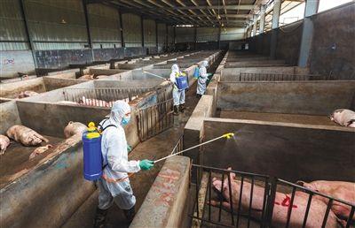 山东将开展非洲猪瘟检测能力比对工作