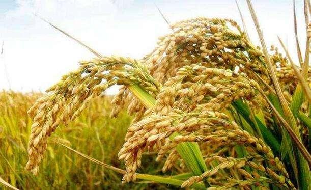 山东调整部分农业创新团队建设依托单位和岗位专家