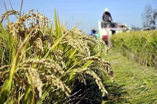 山东征集2019年农业农村地方标准建设项目 突出区域特色