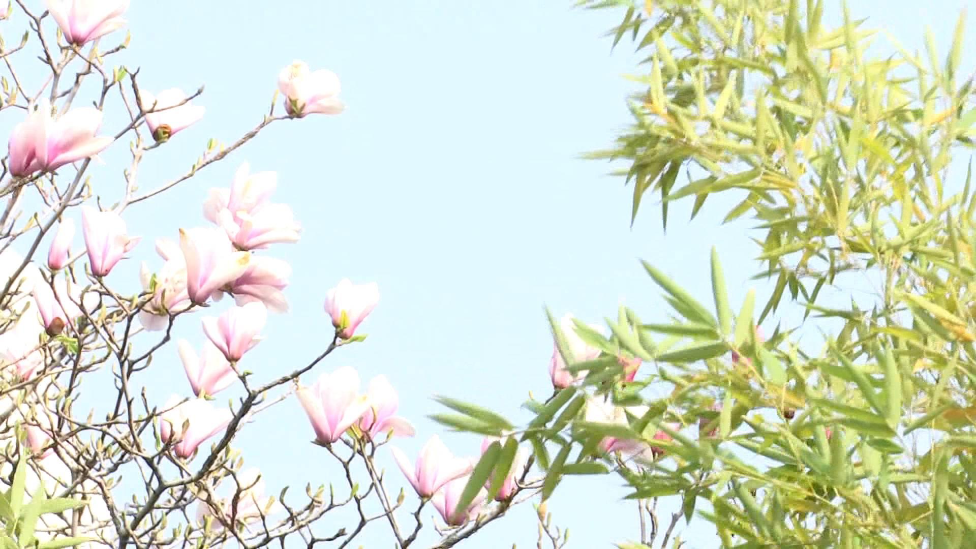 67秒丨困skr人的春困是病吗?专家支招,应对春困我们应该怎么做