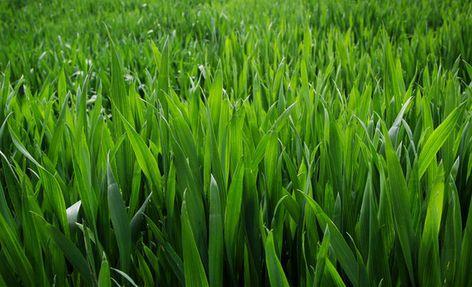 山东:土壤墒情适宜 建议农民朋友防控病虫害