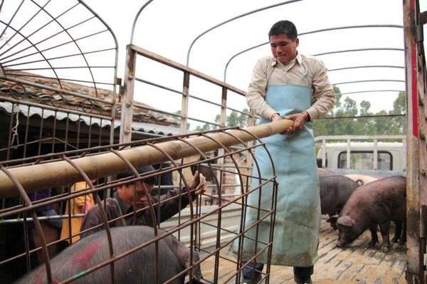 青岛严防非洲猪瘟 排查生猪2165.9万头次未见异常