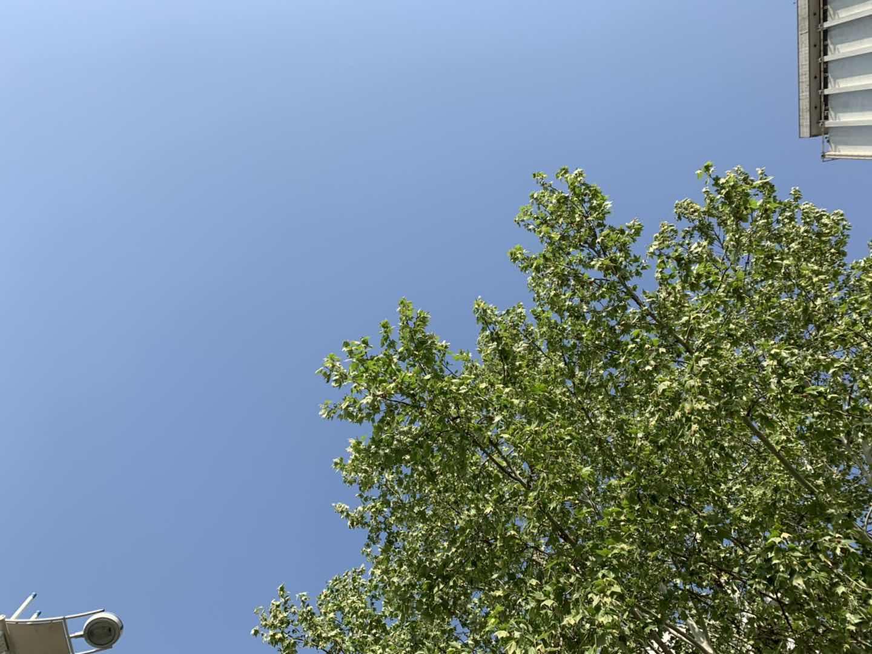 海丽气象吧 | 山东发布内陆大风蓝色预警 多地最高温突破30℃