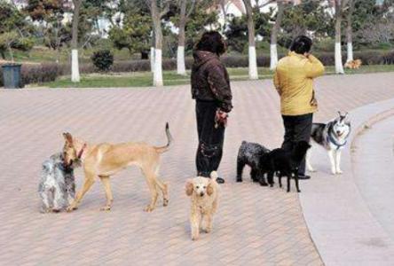 济南警方严查无证养犬行为 一女士无证养犬面对警方执法惊声尖叫