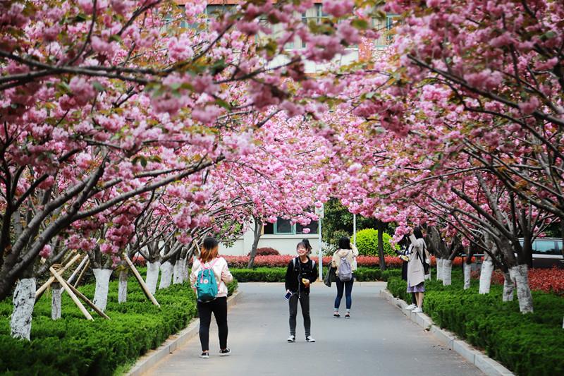 高清组图丨最美赏花季 走进青岛这所森林式大学