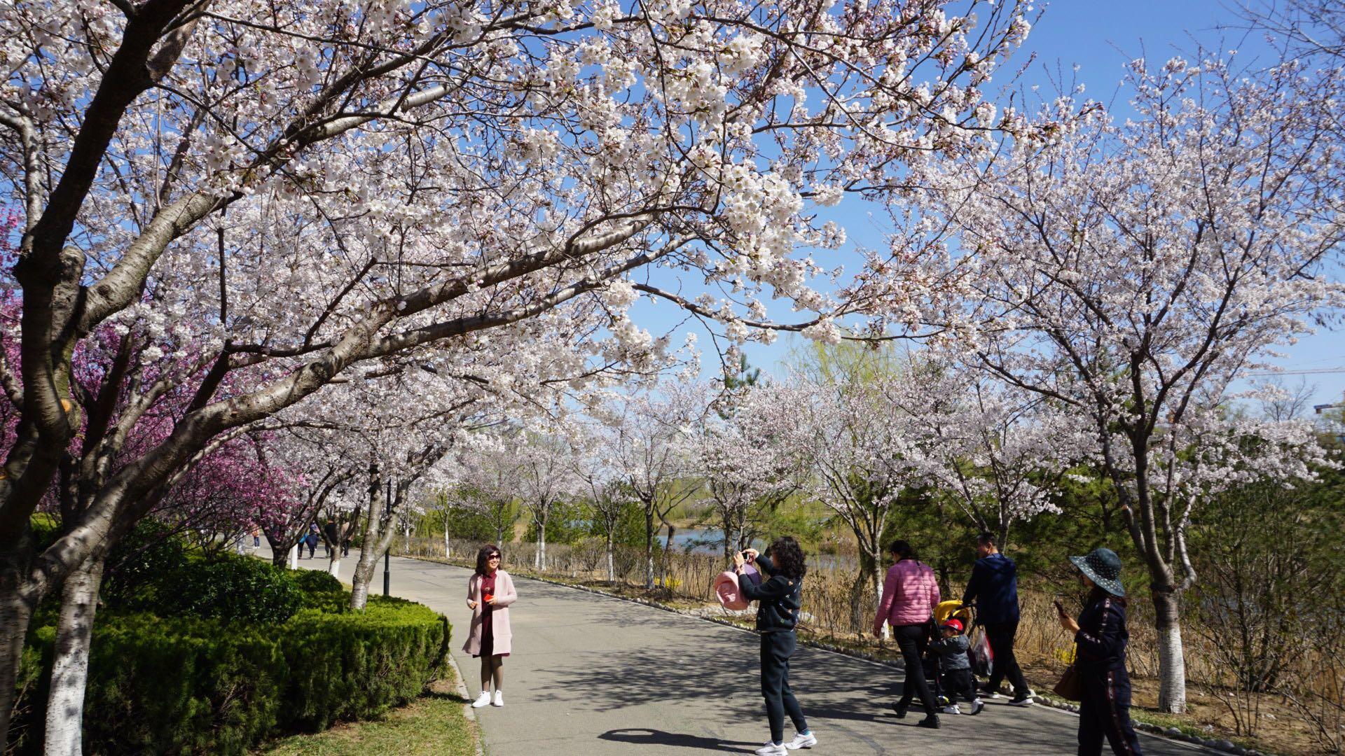 潍坊市2019文化旅游项目推介 重点项目签约额达21.46亿元