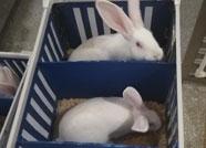 潍坊市SPF级实验动物出口实现零突破