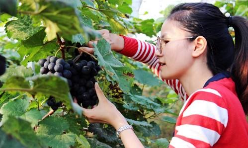 潍坊昌乐将于4月30日启动乡村旅游节 为期6个月