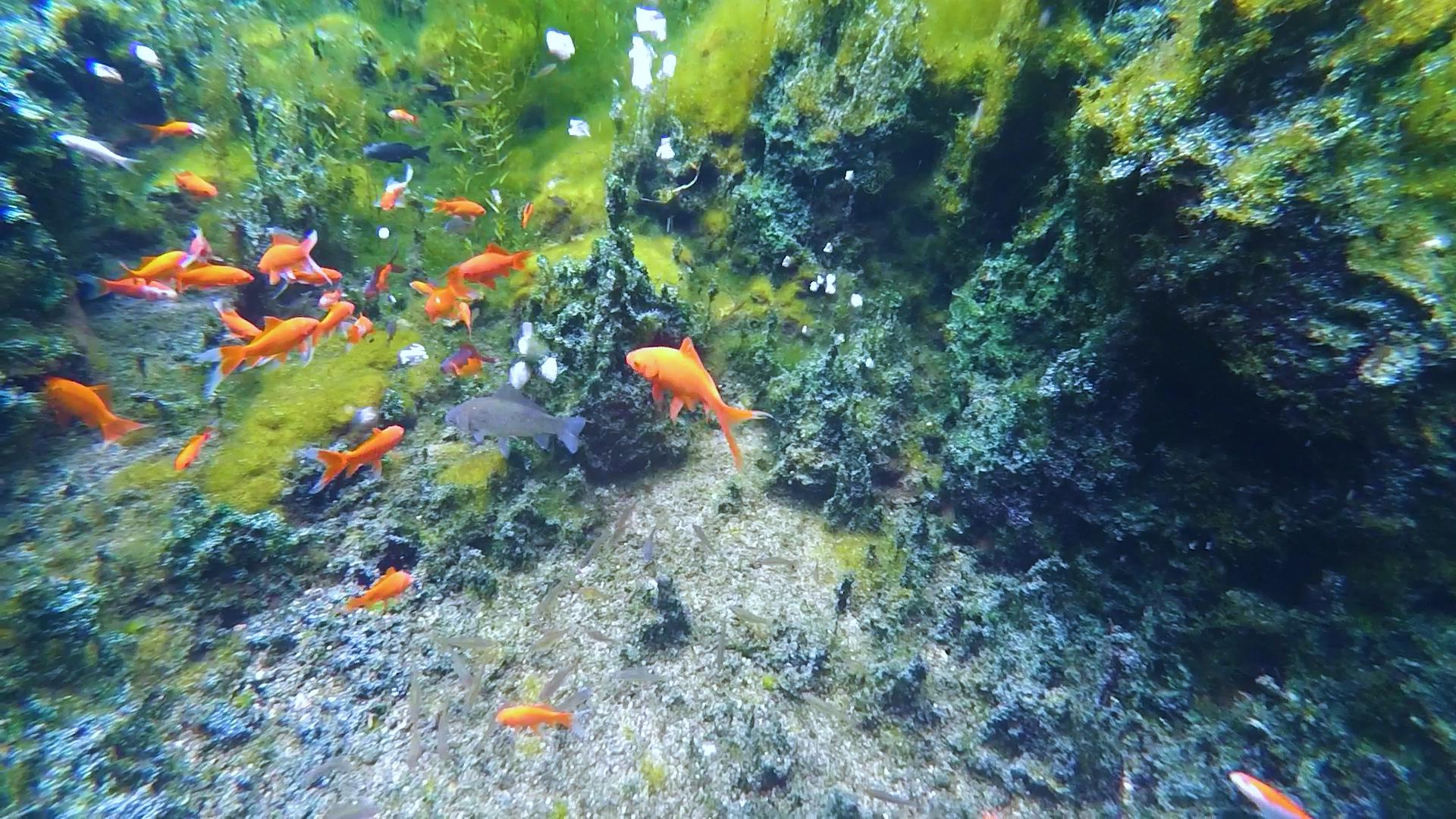 水下探春|69秒视频带你领略济南九女泉