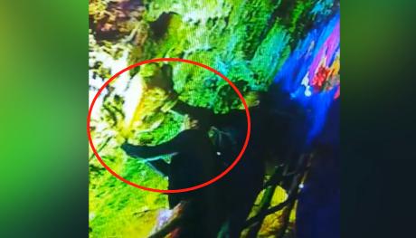 31秒|临沂一景观400万年钟乳石被敲断后偷走 监控视频曝光!