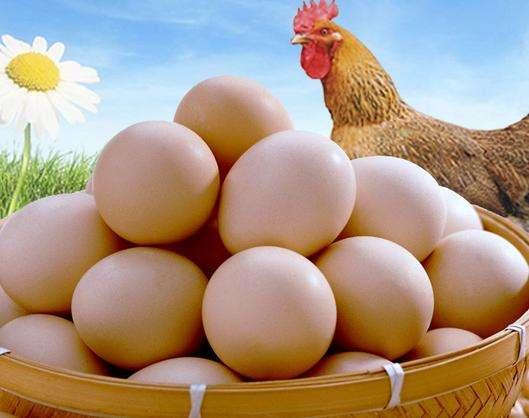 山东5月鸡蛋价格或继续上涨 幅度不大