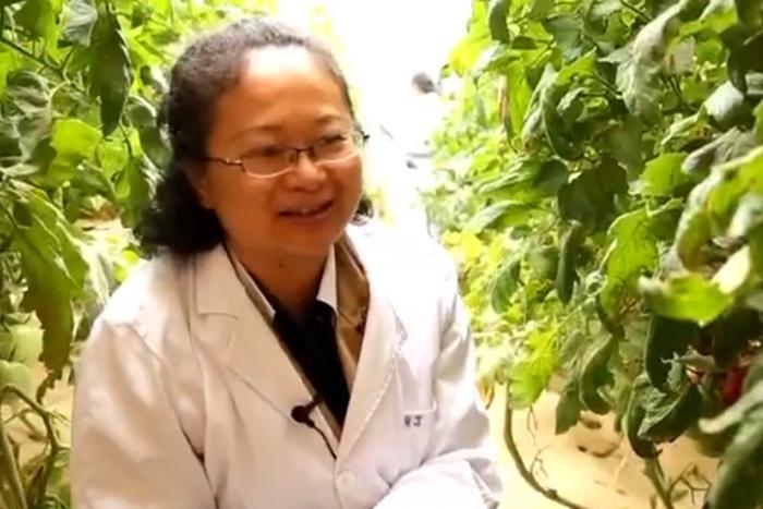 中国梦 劳动美|把论文写在大地上的土肥专家——江丽华