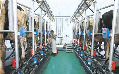 山东要求5月15日前补齐所有屠宰企业派驻官方兽医缺口