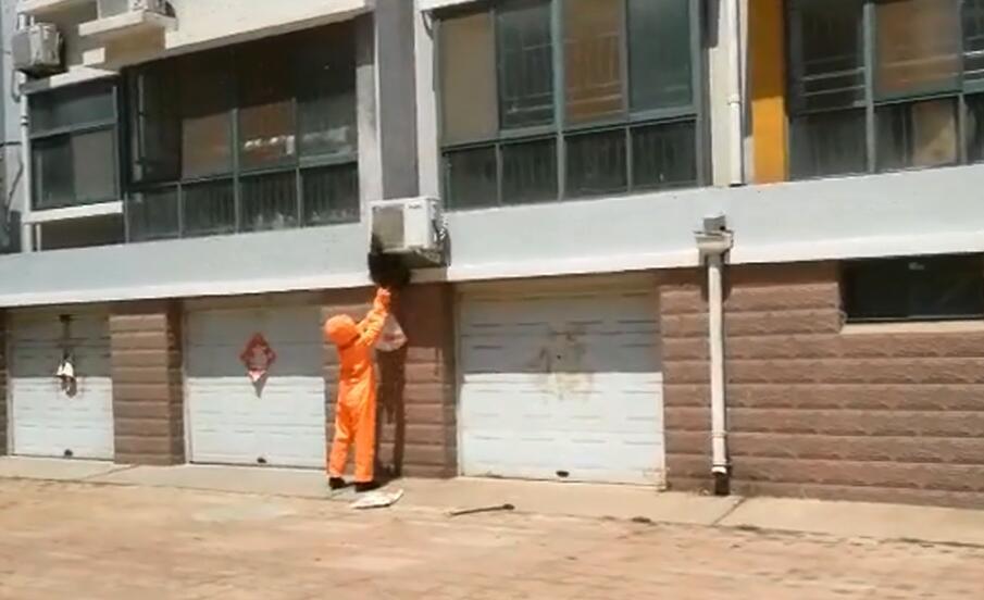 天暖马蜂肆虐 潍坊一小区住户窗外惊现大量马蜂