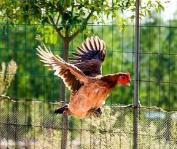 山东省省级畜禽遗传资源保种场评审结果公示 4家入选