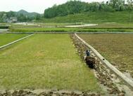 山东省财政首次奖励200个耕地保护成绩突出乡镇