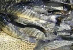 山东将做好2019年度省级水生动物重点疫病监测工作