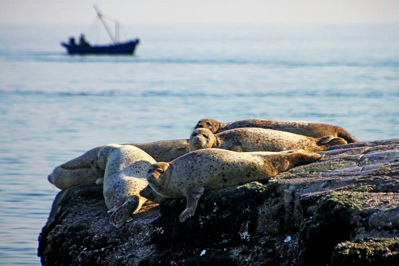 海豹萌萌、万鸟齐飞,带你进入山东最北边的海岛秘境