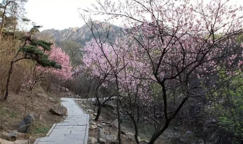 母亲节福利!曲阜石门山景区对女同胞免费开放