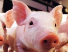 第十一批5家省外企业可向山东提供生猪及生猪产品