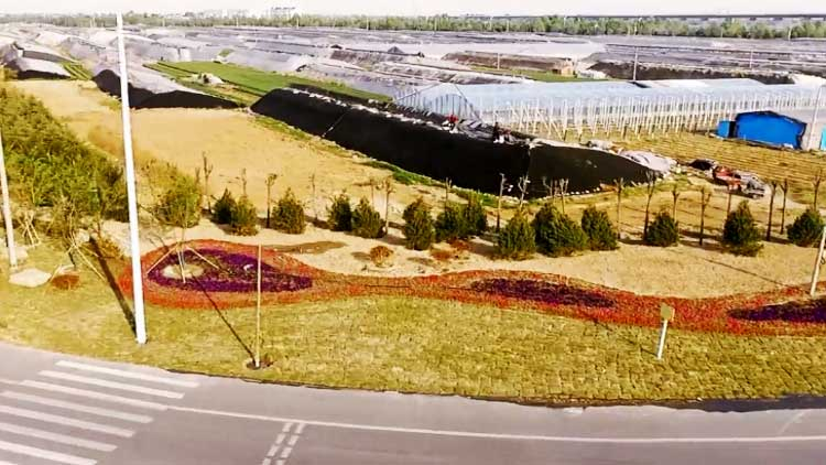 50秒丨2.4万株乔木齐亮相 308国道寿尧路至大西环路段绿化工程正式竣工