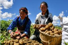 """【鲁藏情深】④一道藏族传统农家菜,如何催生两个""""特色小镇"""""""