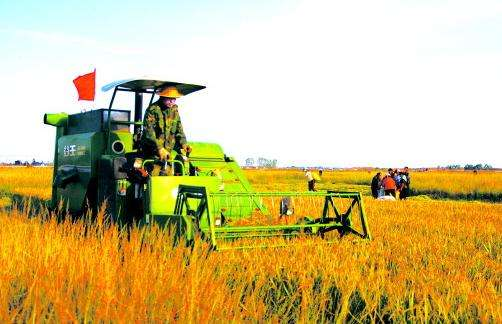 山东:毫不放松抓好粮食生产 确保2019年粮食总产量稳定在1000亿斤以上