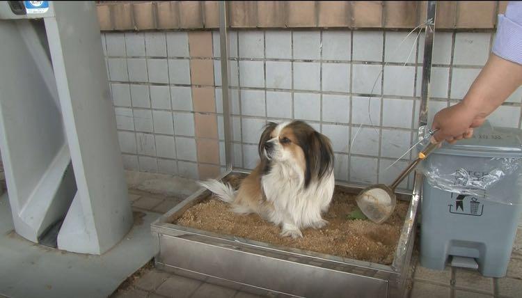 """工具齐全!潍坊街头有了""""宠物厕所"""""""