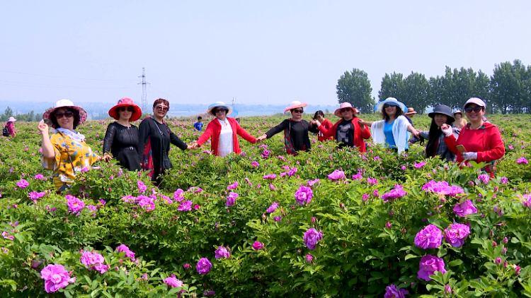 """85秒丨600亩鲜花齐盛开 潍坊大柳树村这片""""玫瑰花海""""惊艳所有人!"""