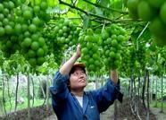 潍坊已批准发布并实施农业标准规范353项 创建国家农业标准化示范区45个