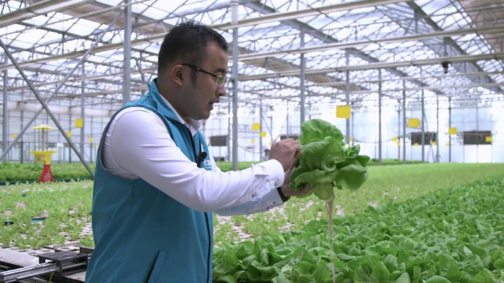 """从以色列引进农业新科技 他的潍坊""""玻璃屋""""蔬菜年产18季"""