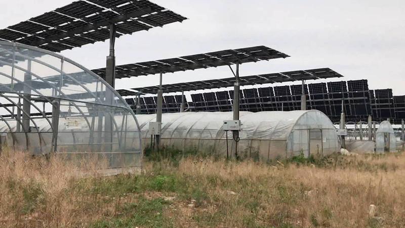 """新泰采煤沉陷区建起先进""""农光互补项目"""" 两年后却杂草丛生"""