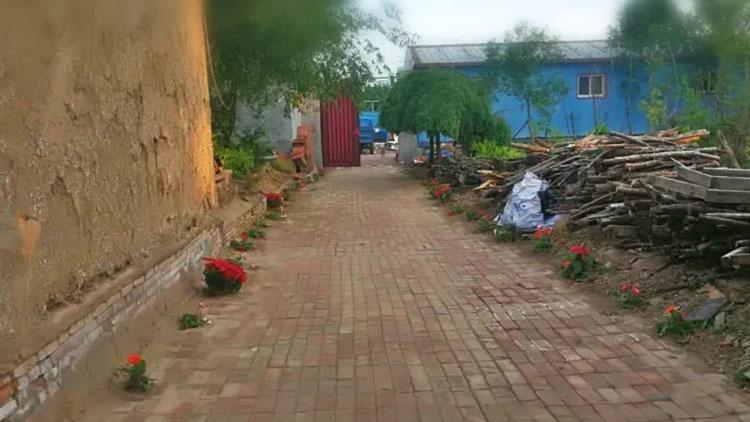 35秒丨无棣一老人偷走道路旁景观花卉 栽种在自家院子里