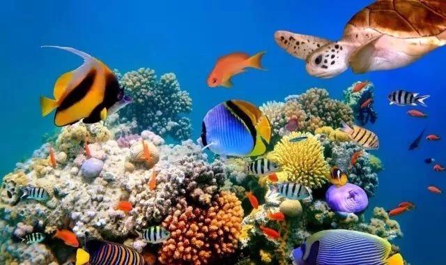 走进深蓝 | 世界海洋日——神奇的海底世界,美丽的海洋生物