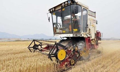 山东:收获小麦1299.42万亩 占应收面积两成以上