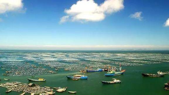 今年山东严格控制捕捞强度 打好渤海区域攻坚战