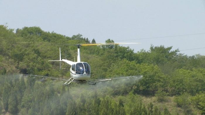 直升机喷农药!济南南部山区用上了新帮手,每次10分钟喷700亩