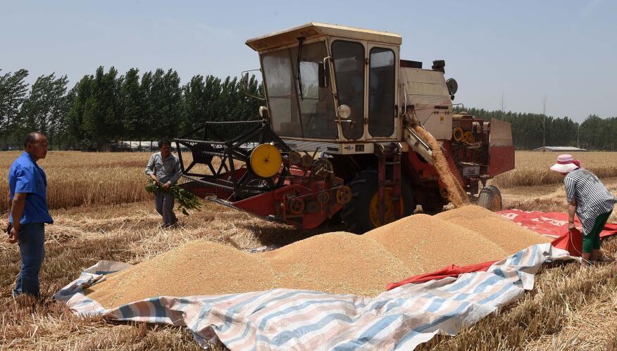 山东已收获小麦3677.6万亩 收获过六成