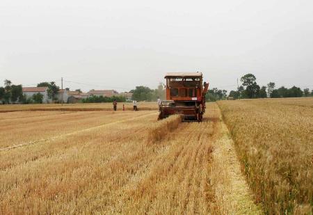 满满的收获季!山东全省麦收过七成 菏泽基本收获结束
